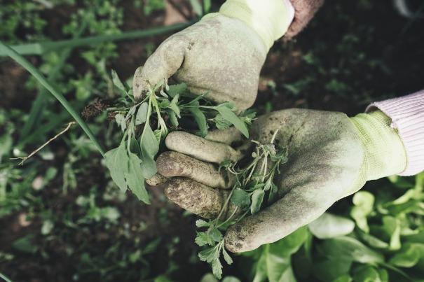 gardening-2518377_960_720